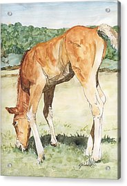Horse Art Long-legged Colt Painting Equine Watercolor Ink Foal Rural Field Artist K. Joann Russell  Acrylic Print