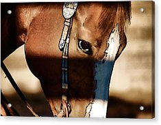 Acrylic Print featuring the photograph Horse At Work by Pamela Blizzard