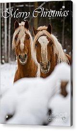 Horse Christmas Card 2 Acrylic Print by Michael Cummings