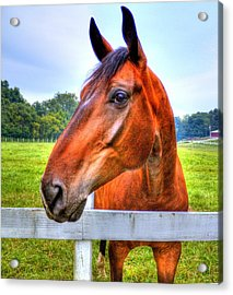 Acrylic Print featuring the photograph Horse Closeup by Jonny D