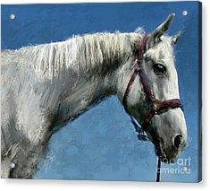 Horse  Acrylic Print by Daliana Pacuraru