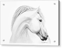 Horse Acrylic Print by Don Medina