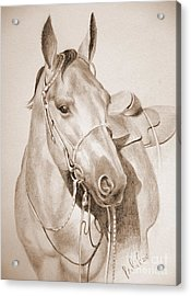 Acrylic Print featuring the drawing Horse Drawing by Eleonora Perlic