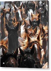 Horse Ears Acrylic Print
