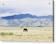 Horse Eating In Pastoral Zone Acrylic Print by Lanjee Chee