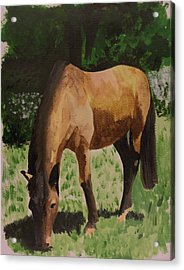 Horse Acrylic Print by Isabella F Abbie Shores FRSA