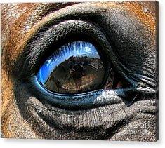 Horse Eye Acrylic Print by Daliana Pacuraru