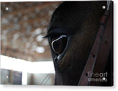 Horse Eye From Behind Acrylic Print