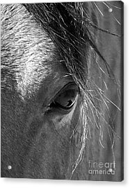 Horse Eye In Black And White Acrylic Print