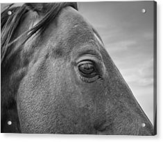 Horse Eye Acrylic Print by Leland D Howard