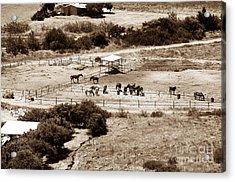 Horse Farm At Kourion Acrylic Print by John Rizzuto