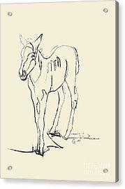 Horse- Foal -josje Acrylic Print