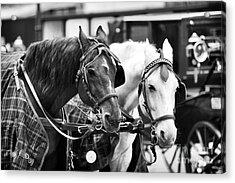 Horse Friends Acrylic Print by John Rizzuto