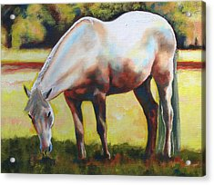 Horse Grazing In The Shade Acrylic Print