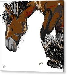 horse - Guus Acrylic Print