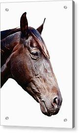 Horse Head Acrylic Print by Jan Brons