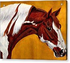 Horse Head Study Acrylic Print by Joy Reese