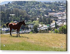 Horse Hill Mill Valley California 5d22663 Acrylic Print by Wingsdomain Art and Photography