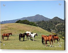Horse Hill Mill Valley California 5d22672 Acrylic Print by Wingsdomain Art and Photography