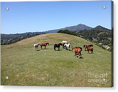 Horse Hill Mill Valley California 5d22673 Acrylic Print by Wingsdomain Art and Photography
