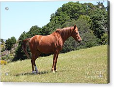 Horse Hill Mill Valley California 5d22683 Acrylic Print by Wingsdomain Art and Photography