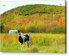 Horse In Autumn Field Acrylic Print