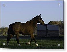 Horse In Field Acrylic Print by Jason Smith
