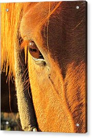 Horse In Sunset Acrylic Print