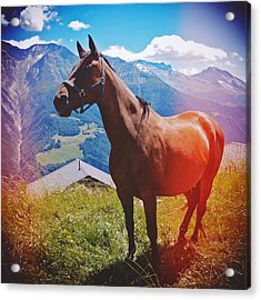 Horse In The Alps Acrylic Print by Matthias Hauser