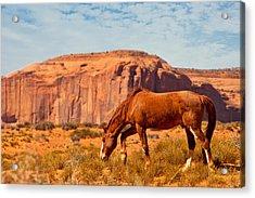 Horse In The Desert Acrylic Print by Susan Schmitz