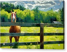 Acrylic Print featuring the painting Horse In The Field by Jeff Kolker