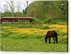 Horse In The Meadow Near Weetamoo Acrylic Print