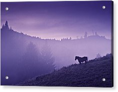 Horse In The Mist Acrylic Print by Yuri Santin
