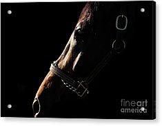 Horse In The Shadows Acrylic Print
