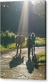 Horse In The Spotlight Acrylic Print