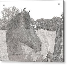 Acrylic Print featuring the photograph Horse by Irina Hays