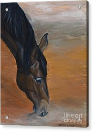 Acrylic Print featuring the painting horse - Lily by Go Van Kampen