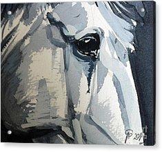 Horse Look Closer Acrylic Print