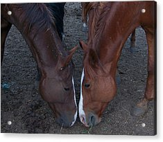 Horse Love Acrylic Print by Cherie Haines