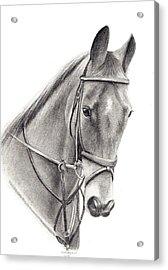 Horse Acrylic Print by Mary Mayes