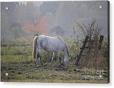 Horse On A Peaceful Day Acrylic Print