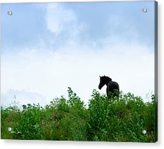 Acrylic Print featuring the photograph Horse On The Hill by Joan Davis
