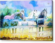 Horse Paintings 008 Acrylic Print by Catf
