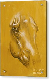 Horse Portrait Acrylic Print by Tamer and Cindy Elsharouni
