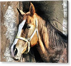 Horse Portrait - Drawing Acrylic Print