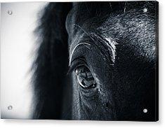 Horse Reflection Acrylic Print
