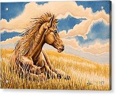 Horse Resting Acrylic Print
