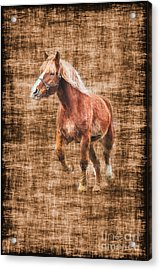 Horse Running Acrylic Print by Dan Friend