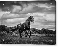 Horse Running In Field Acrylic Print by Rory Turnbull / Eyeem
