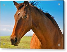 Acrylic Print featuring the photograph Horse by Sabine Edrissi
